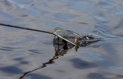 Галерея рыбалка 14